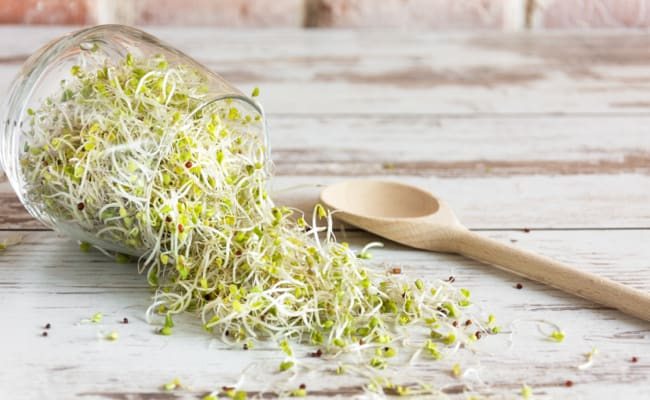 DIY: The Beginner's Guide to Sprouting