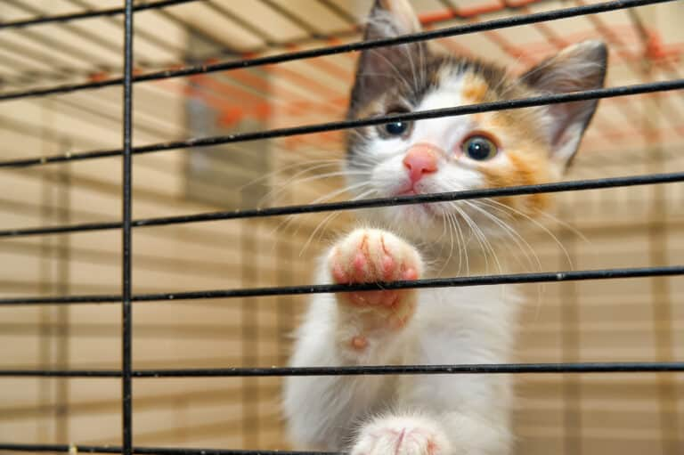 April 10 Marks the Founding of ASPCA